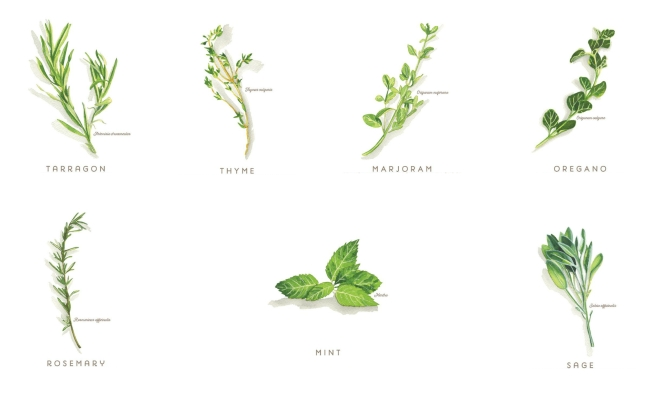 start your herb garden culinary herbs collage