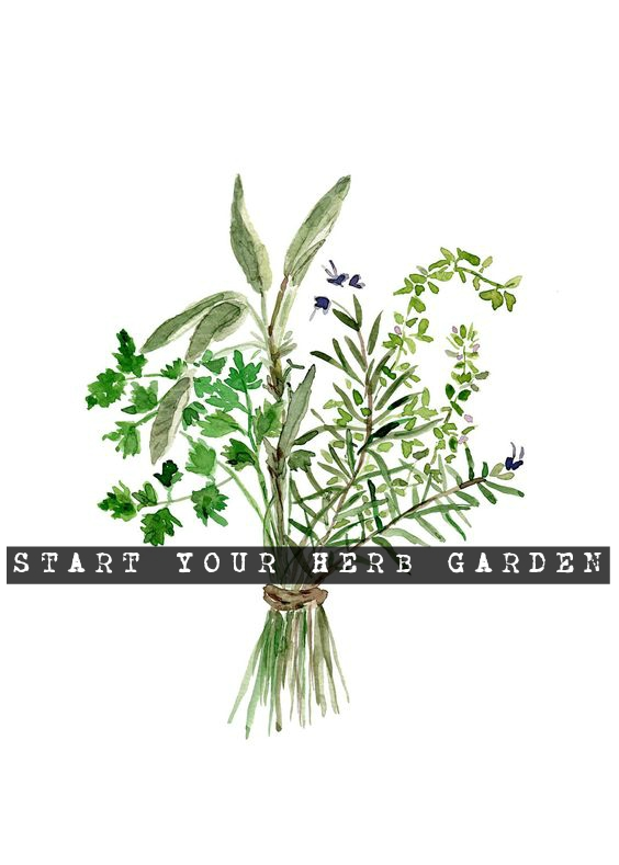 start your herb garden title image