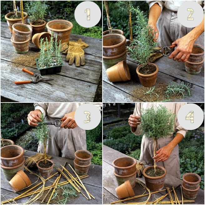 How to Make a Rosemary Topiary collage