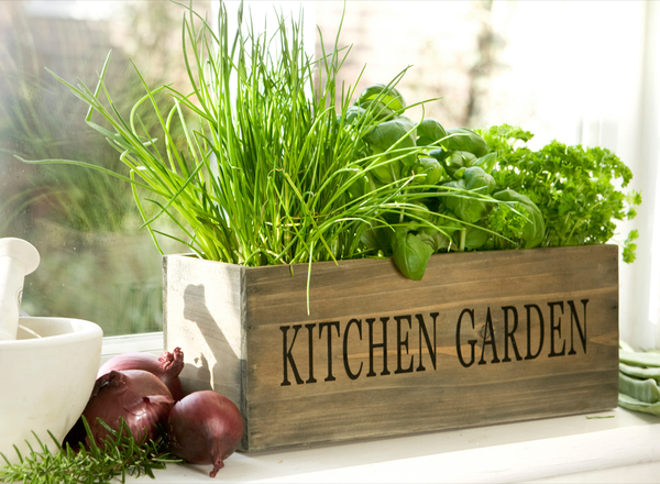 potting herbs is easy kitchen garden