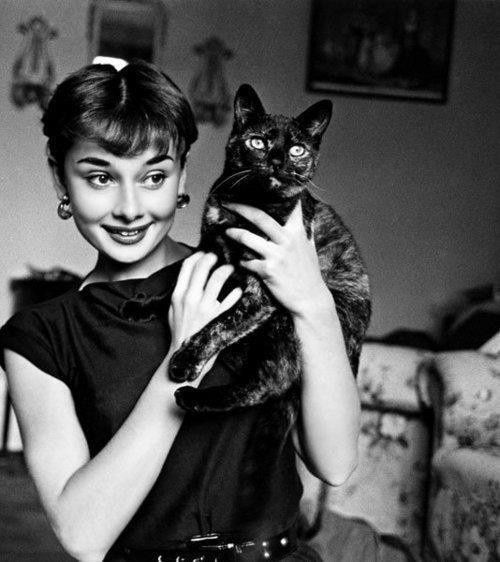 160513-friday-finds-hepburn-cat