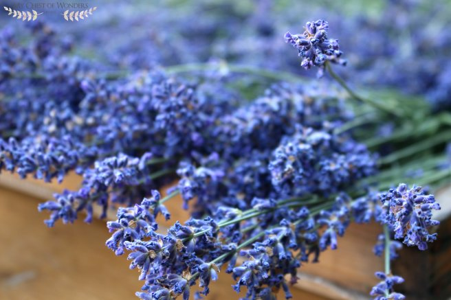 homemade-lavender-syrup-shade