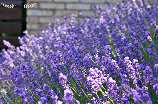 homemade-lavender-syrup-shrubs