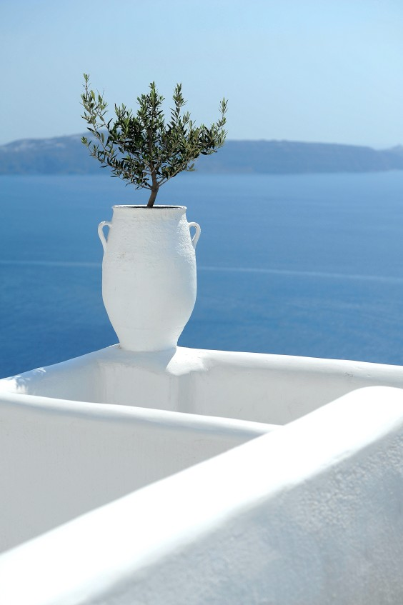 aegean with olive tree
