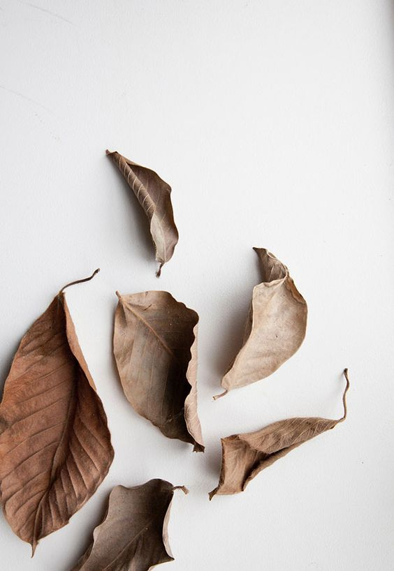 brown leaves with white background