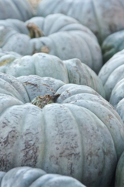 robins egg blue pumpkins