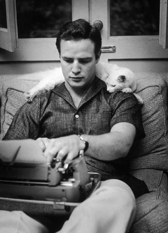 marlon brando with cat