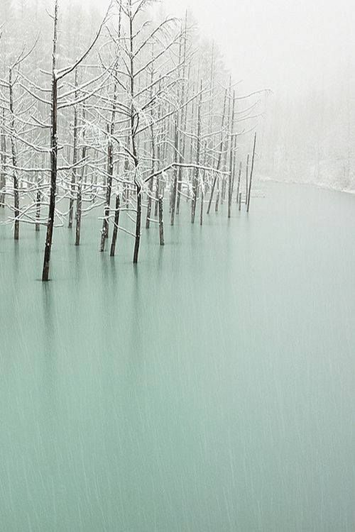 frozen water and trees