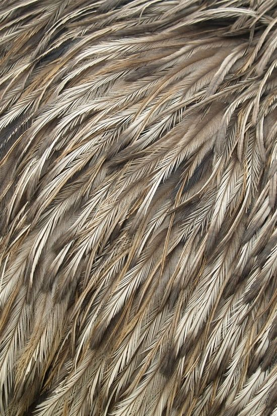 feathers closeup