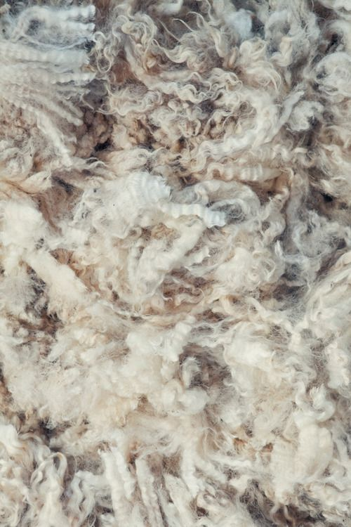 wool closeup