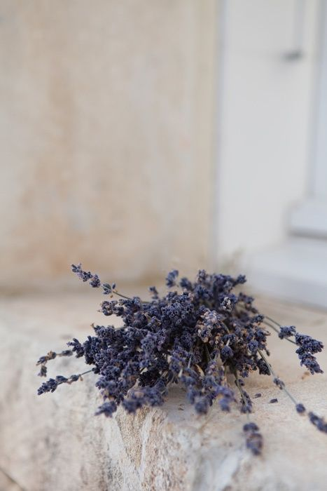 lavander in windowsill