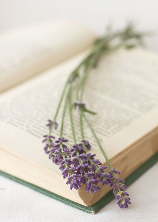 book and lavender