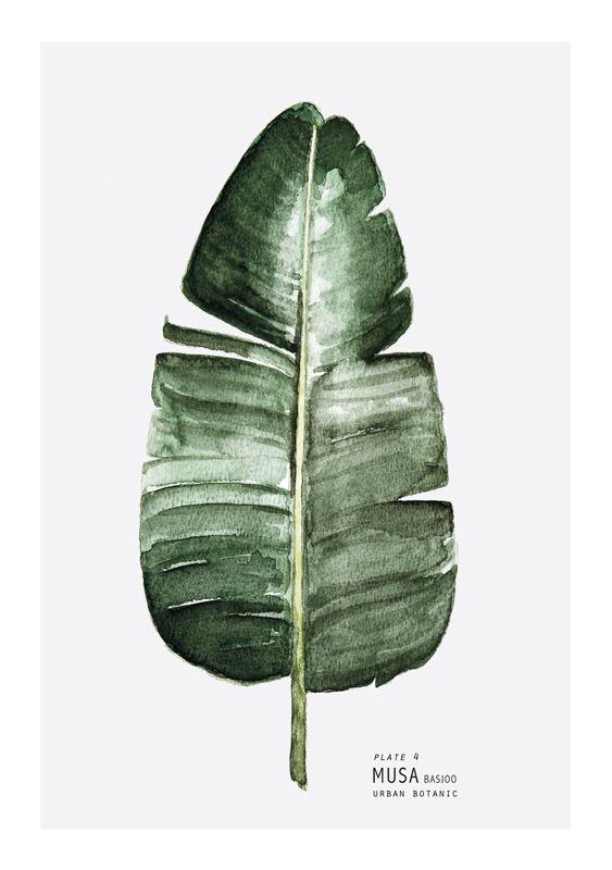 urban botanic art print musa