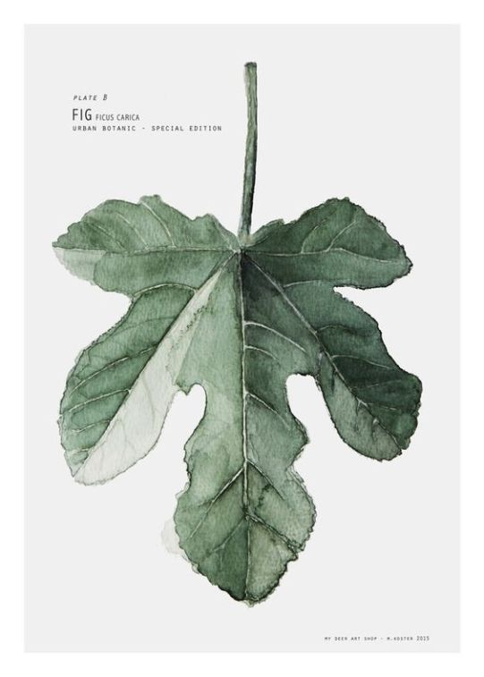 urban botanic art print fig