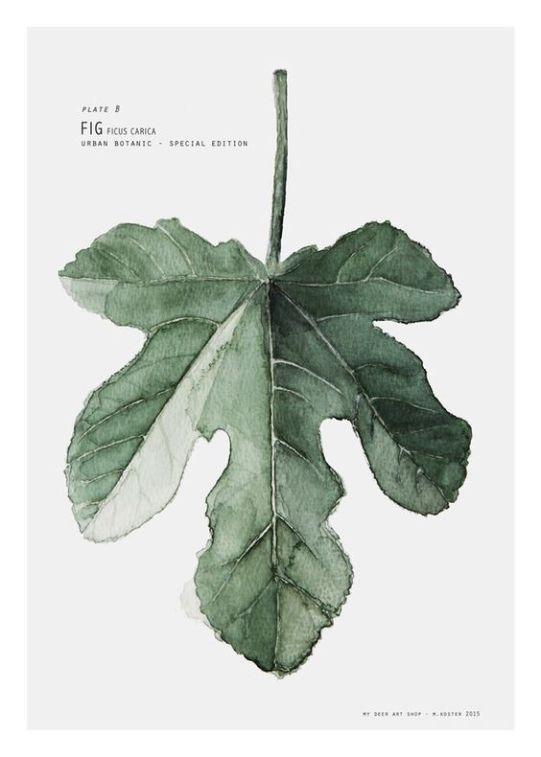 urban botanic art print fig