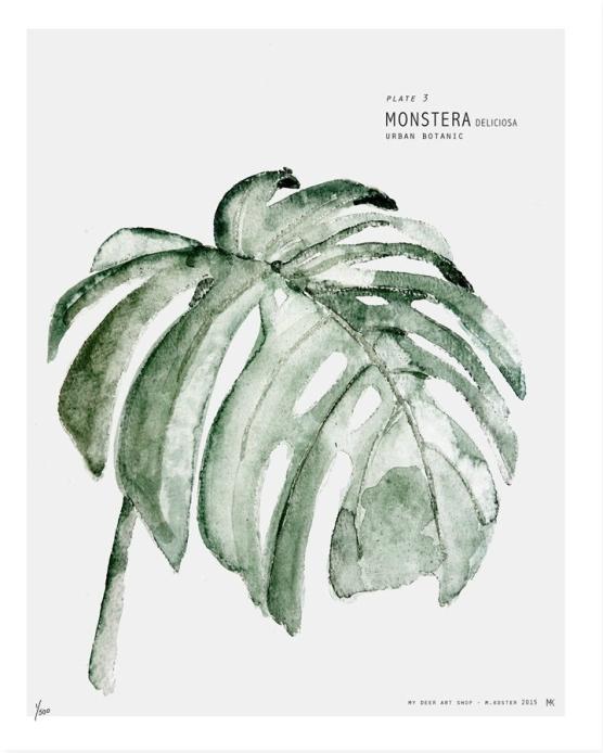 urban botanic art print monstera