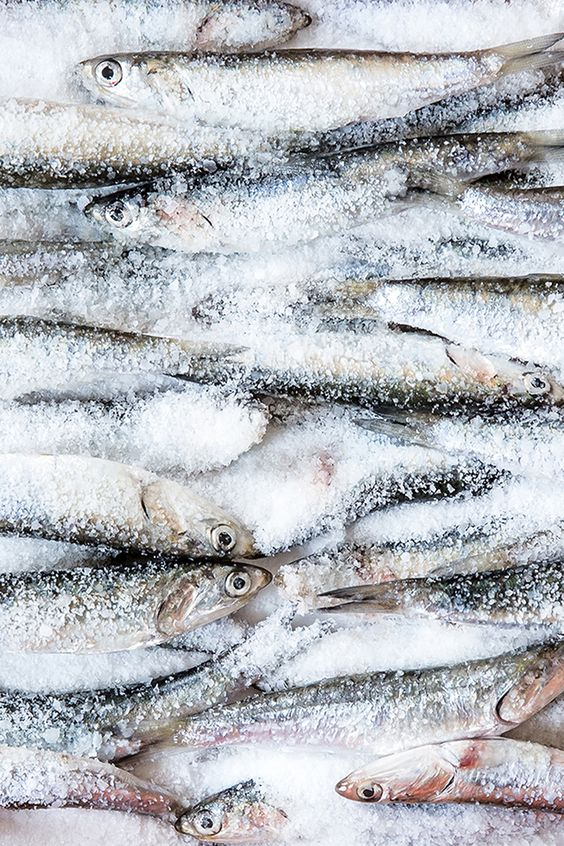 fish in salt