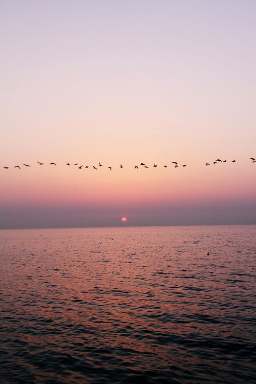 seas sunset birds